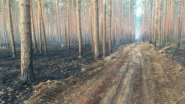 Waldbrand in Fichtenwalde – Kampf gegen die Flammen